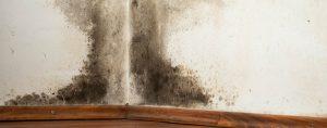 mold removal topsfield