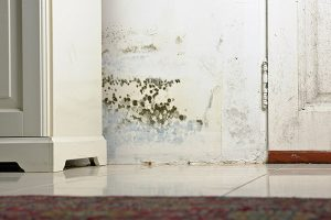 mold damage cleanup topsfield